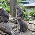 烏山獼猴保護區草山月世界 (66).JPG