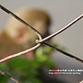 烏山獼猴保護區草山月世界 (71).JPG