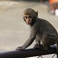烏山獼猴保護區草山月世界 (78).JPG