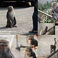 烏山獼猴保護區草山月世界 (80_1).JPG