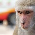 烏山獼猴保護區草山月世界 (91).JPG