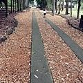 台大竹山實驗林下坪熱帶植物園 (21)
