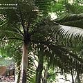 台大竹山實驗林下坪熱帶植物園 (28)