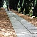 台大竹山實驗林下坪熱帶植物園 (67)