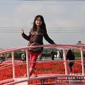 中社花市鬱金香花季 (69)
