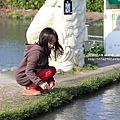 中社花市鬱金香花季 (132)