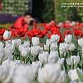 中社花市鬱金香花季 (192)
