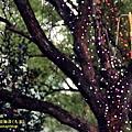 南投2014台灣燈會 (73).JPG