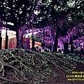 南投2014台灣燈會 (134).JPG