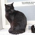 侯硐找貓咪~ (60).JPG