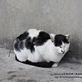 侯硐找貓咪~ (97).JPG