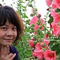 學甲蜀葵花海 (105).JPG