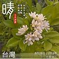 8.28草屯手工藝館 (1).jpg