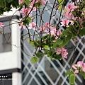 台中綠川~007.JPG