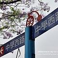 中興新村藍花楹 (41).JPG