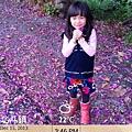 12.15北斗鯊魚咬土司東螺溪豔紫荊 (5).jpg
