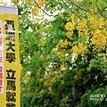 亞洲大學~阿勃勒(44).JPG