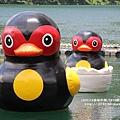 花蓮鯉魚潭紅面番鴨 (25).JPG
