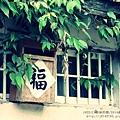 花蓮鯉魚潭紅面番鴨 (40).JPG