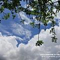 花蓮鯉魚潭紅面番鴨 (76).JPG
