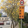 芬園黃花風鈴小半天一日遊 (9).JPG