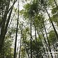 芬園黃花風鈴小半天一日遊 (72).JPG