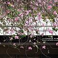 台中綠川~001.JPG