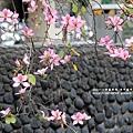 台中綠川~009.JPG