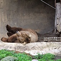 溪州木柵動物園深坑老街一日遊 (60).JPG