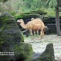 溪州木柵動物園深坑老街一日遊 (86).JPG