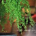 斗六摩爾花園 (87)fb.JPG