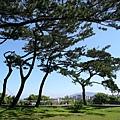 松原別館~名符其實就是松樹很多啦