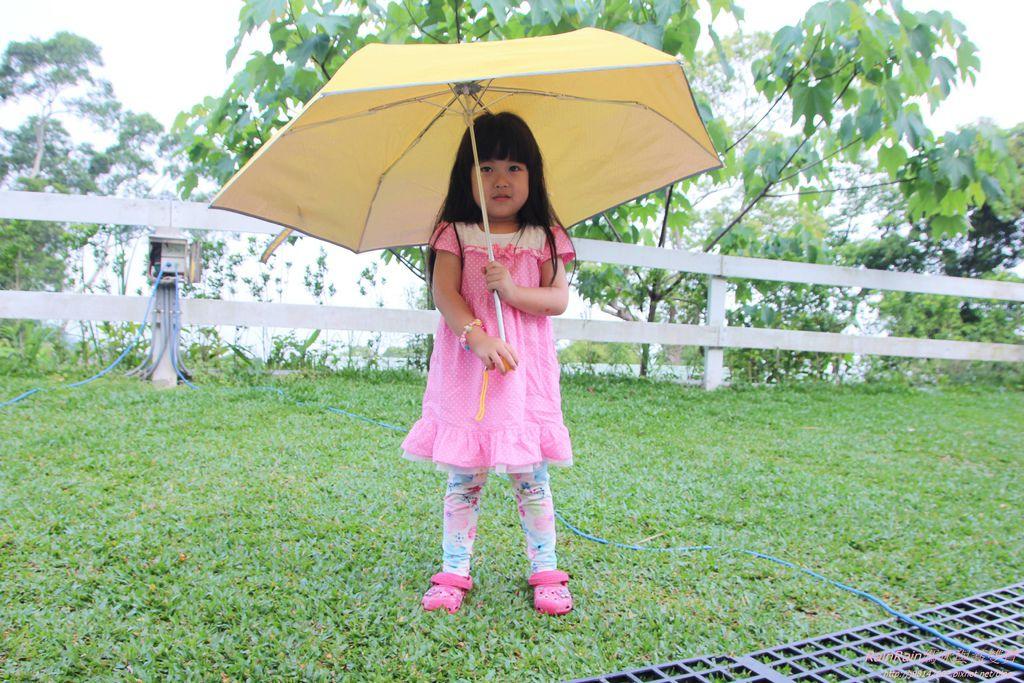 晨揚雨傘IMG_0247.JPG
