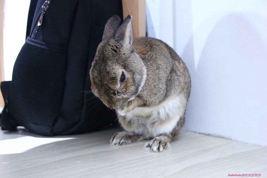 兔子先生10.JPG
