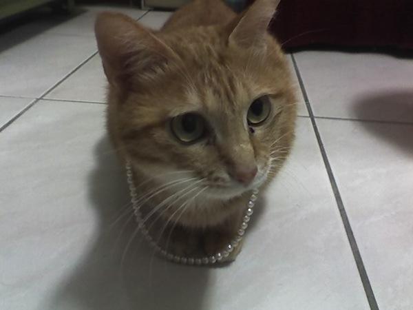 戴珍珠項鍊的少女