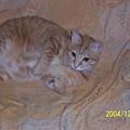 沙發上的貓