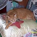 貴妃枕上的貓