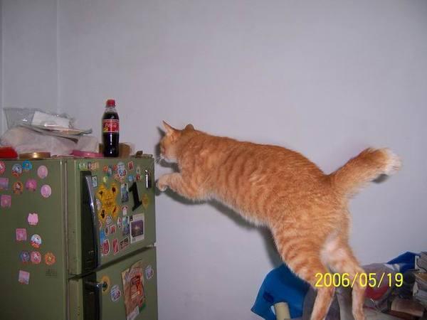 飛躍的橘子,我和加菲貓學的,目標:冰箱