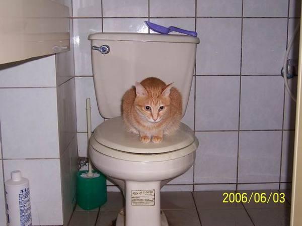 我要學習上廁所