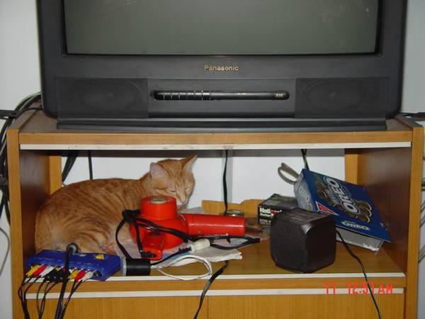 電視櫃我也能睡喔
