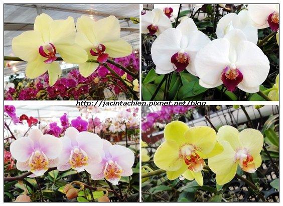 金車員山蘭花園05-multi-f.jpg