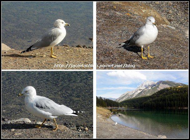 Canada_08746-multi-f.jpg