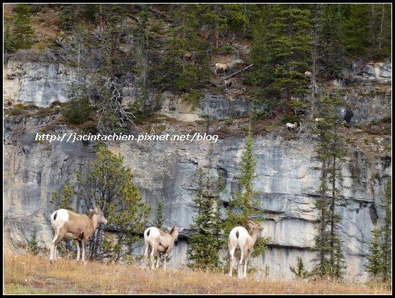 Canada_09196-f.jpg