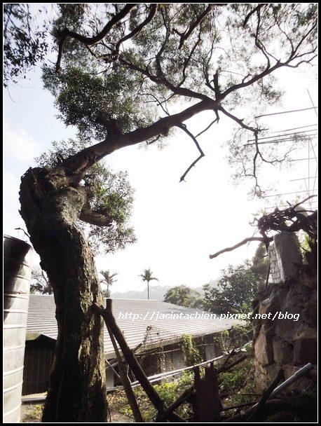 白石湖吊橋_08