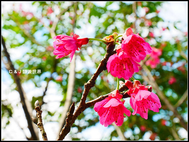 新竹二泉湖畔_020446.jpg