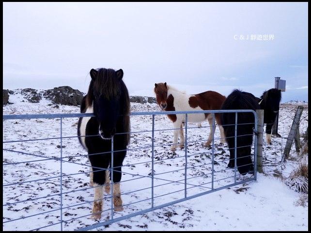 冰島100103.jpg