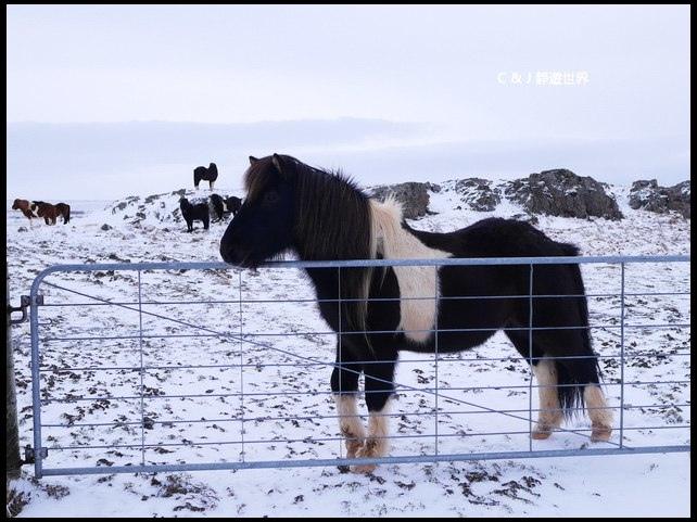 冰島100088.jpg