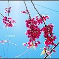武陵農場60203.jpg