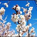 武陵農場60184.jpg