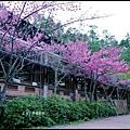 武陵農場50740.jpg
